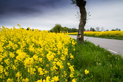 Yellow road Skane Sweden by Maria Eklind @flickr